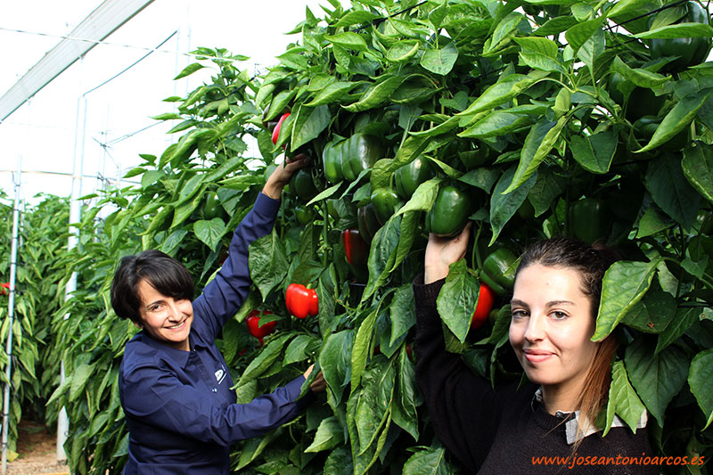 Dolores y Susana, del equipo de Vilmorin. /joseantonioarcos.es