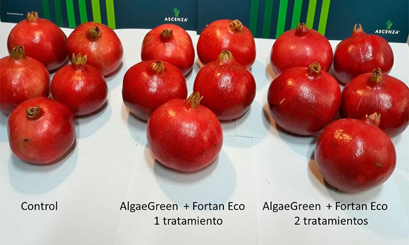 Cultivo de granada ecológica-joseantonioarcos.es