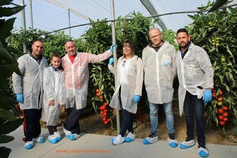 Tomate Sotomayor de Hazera. /joseantonioarcos.es