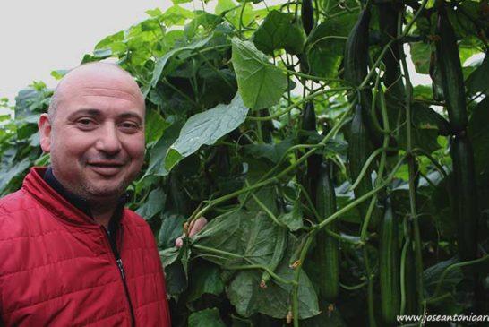 Sanidad vegetal cuando llega el frío
