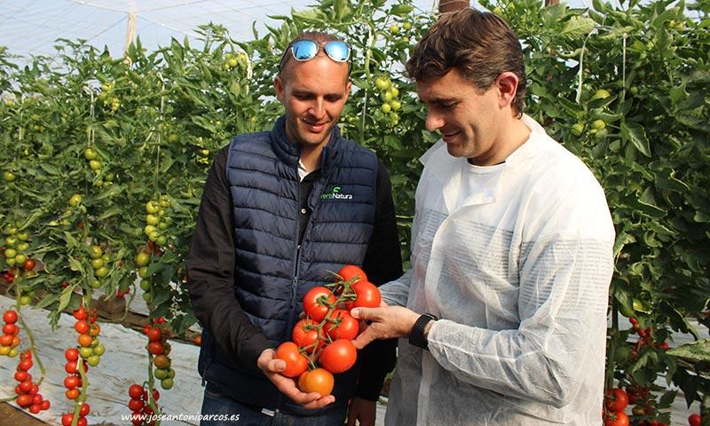 Alejandro García y José Luis Márquez con tomate Romancero. /joseantonioarcos.es