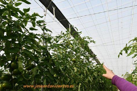 Hilobí, hilo o rafia biodegradable de Agrinature. /joseantonioarcos.es