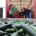 Verduras baratas con salarios cada día más altos