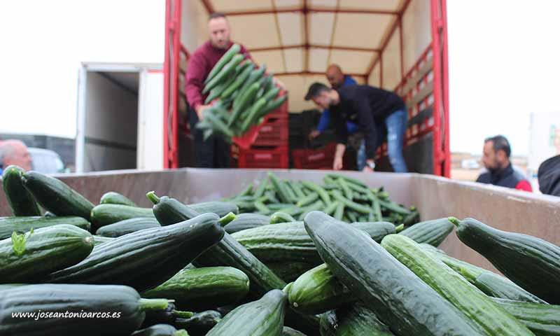 Imagen que se repite todos los años en la que se retiran hortalizas del mercado por presentar precios por debajo del coste de producción. /joseantonioarcos.es