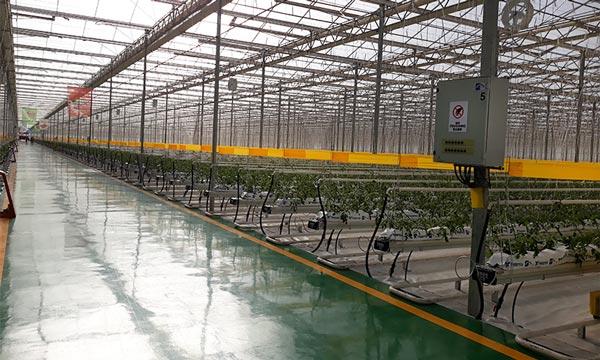 Invernadero de cristal más grande y tecnificado de China y la empresa almeriense SDC-joseantonioarcos.es