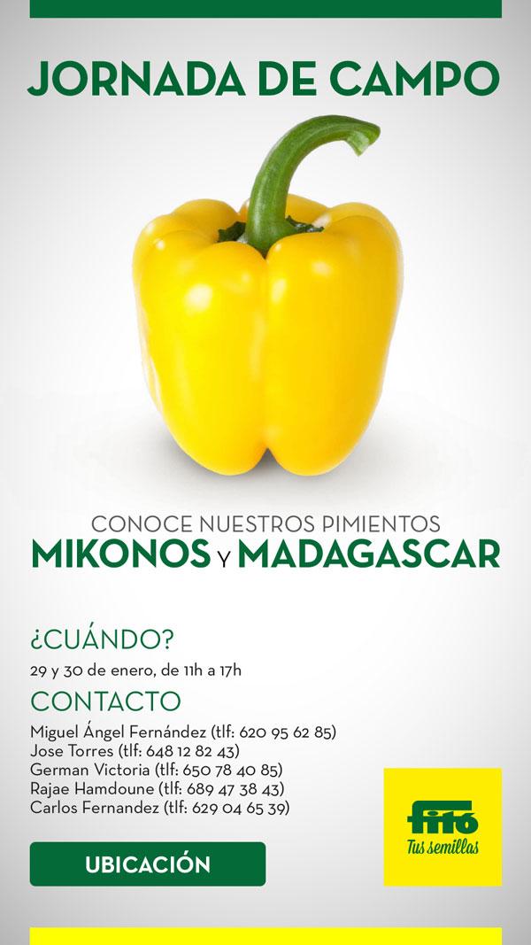 Pimiento california amarilli Mikonos y Madagascar de Semillas Fitó-joseantonioarcos.es