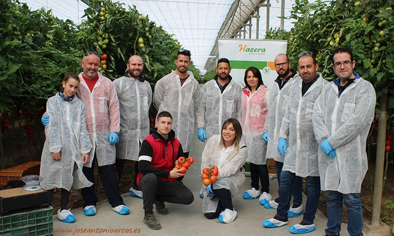 Tomate Sotomayor de Hazera en invernaderos de Almería. /joseantonioarcos.es