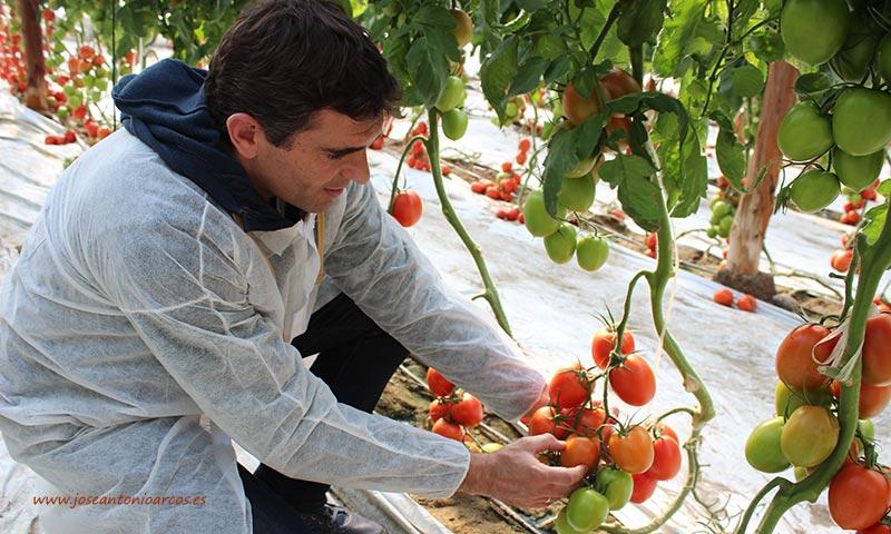 José Luis Márquez, técnico de desarrollo de tomate de Ramiro Arnedo. /joseantonioarcos.es