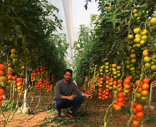 Juan Antonio Rodríguez con tomate Sotomayor. /joseantonioarcos.es