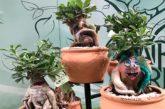 La planta ornamental se cita en la feria de Essen