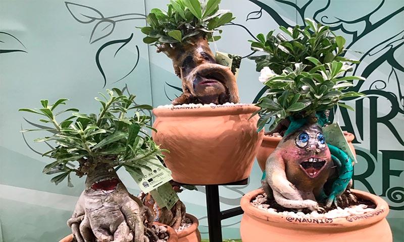 Los Adenios de Plantal Producciones están nominados para el concurso Show Your Colors Award IPM 2020-joseantonioarcos.es