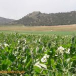 Ingenieros temen la dispersión de las competencias del medio rural