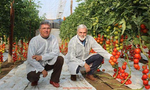 Los hermanos Emilio y José Marín en las jornadas de tomate de Ramiro Arnedo. /joseantonioarcos.es