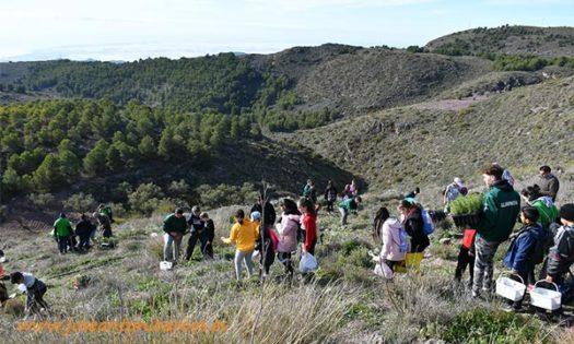 Cooperativa Vicasol apoyando la reforestación de la Sierra de Gádor-joseantonioarcos.es