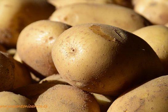 Soluciones biológicas frente plagas y enfermedades en patata