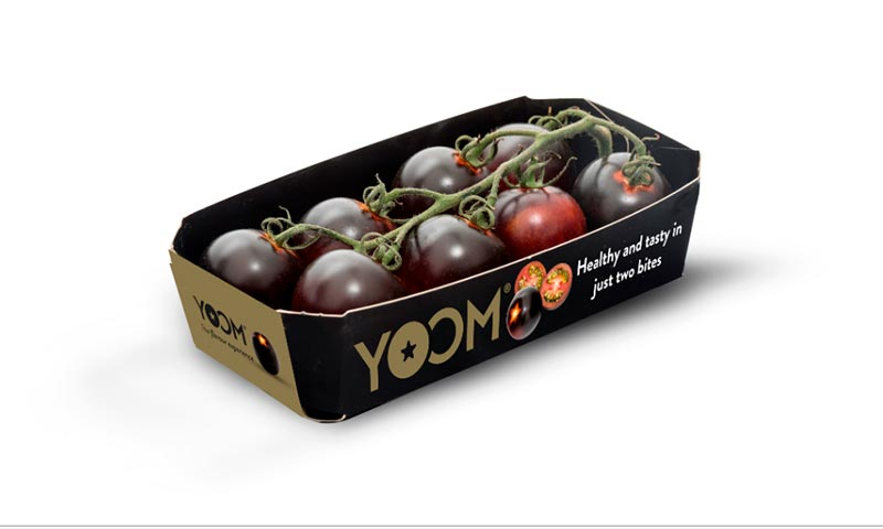 Tomate Yoom de Syngenta-joseantonioarcos.es
