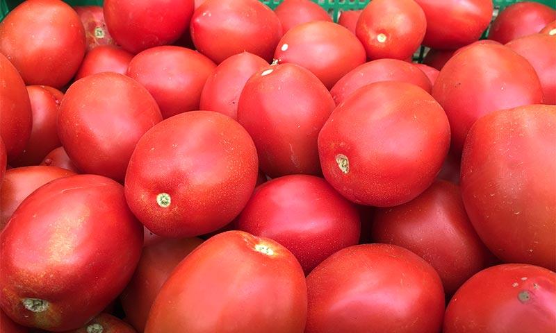 Ecoculture adelanta la coloración de los frutos en ensayos en pimiento y tomate-joseantonioarcos