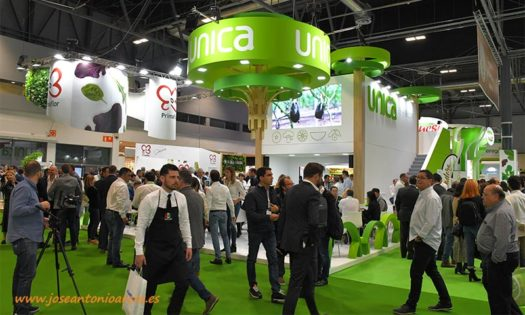 Unica Group, S.C.A. es la primera cooperativa andaluza en ser reconocida como AOP, Asociación de Organizaciones de Productores de Frutas y Hortalizas-joseantonioarcos.es