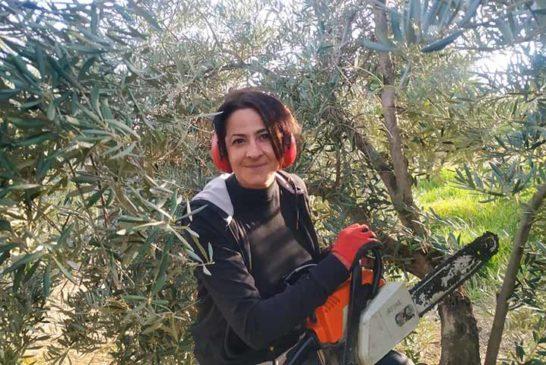 El mayor bosque humanizado del Planeta se muere en Jaén