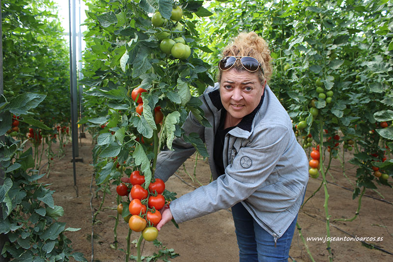 Carmen Belén Barrilado Ferrer, productora de tomate en Almería. /joseantonioarcos.es
