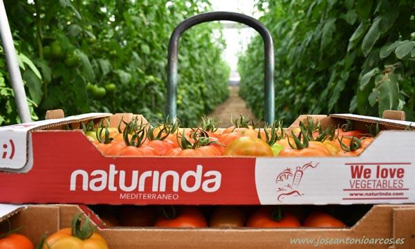 We loves vegetables by Naturinda-joseantonioarcos.es