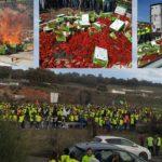 Olivareros independientes elevan el tono de las protestas
