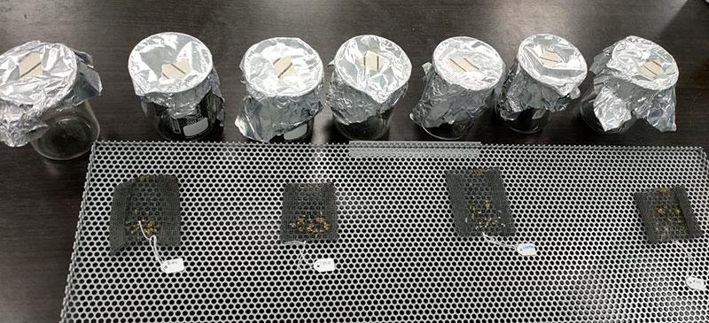 Imagen del sistema de desinfección YPRO+ con los distintos tratamientos de semillas estudiados en el ensayo. /joseantonioarcos.es