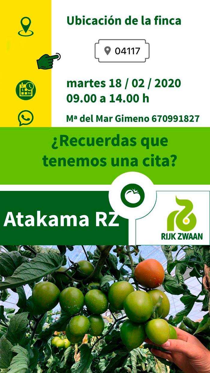 Tomate Atakama de Rijk Zwaan-joseantonioarcos.es