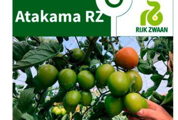 Día 18 de febrero. Jornada de tomate de Rijk Zwaan