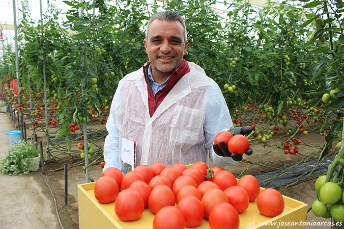 Manuel Ferrer con tomate Harrison. /joseantonioarcos.es