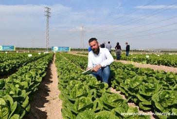 Syngenta marca el ritmo evolutivo de la lechuga en España