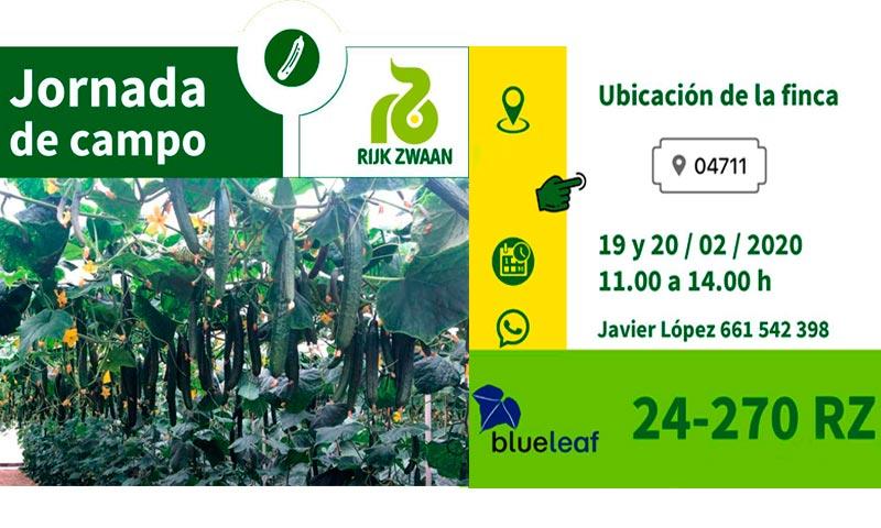 Nueva novedad de pepino de Rijk Zwaan 24-270 bajo el paraguas de blueleaf-joseantonioarcos.es