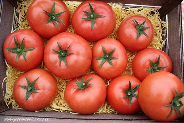 Tomate Celinda de Clause. /joseantonioarcos.es