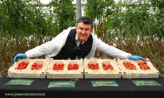 Variedades de tomate cherry de Semillas Fitó-joseantonioarcos.es