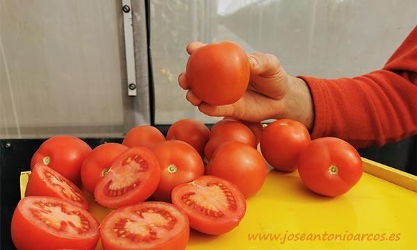 Tomate pera oval de HM Clause-joseantonioarcos.es