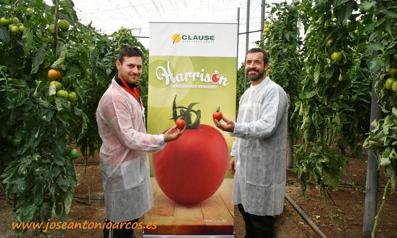 Productores de tomate Harrison de HM Clause-joseantoniaorcos-es