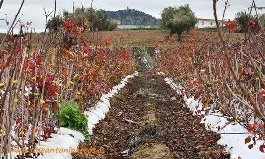 Vivero de Nogalnature en Extremadura. /joseantonioarcos.es