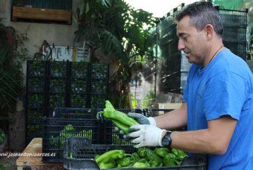 Ingenieros Agrícolas de Almería en apoyo a los agricultores y ganaderos