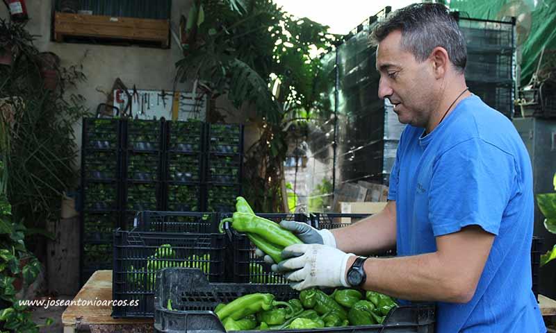 Agricultor almeriense. /joseantonioarcos.es