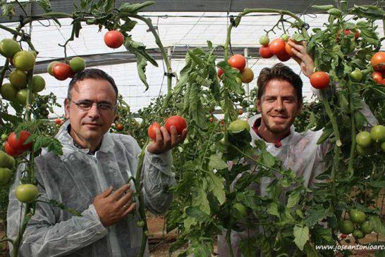 Axia Semillas irrumpe con fuerza en tomate