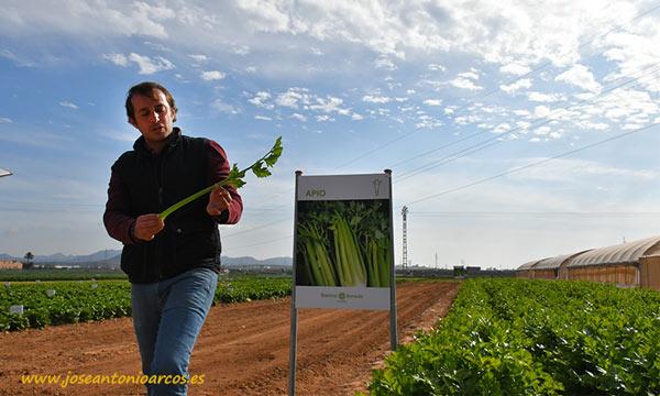 Apio de Ramiro Arnedo. /joseantonioarcos.es