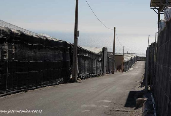 Andalucía propone rutas de bus para trasladar mano de obra al campo