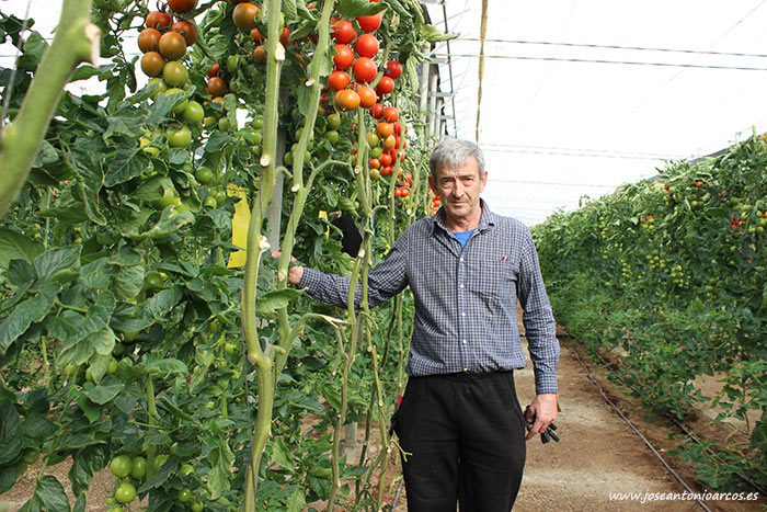 Carlos Fernández Vargas, agricultor y encargado de esta finca de tomate de Axia Semillas. /joseantonioarcos.es