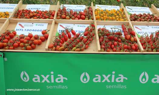 Catálogo de tomate de Axia Semillas. /joseantonioarcos.es