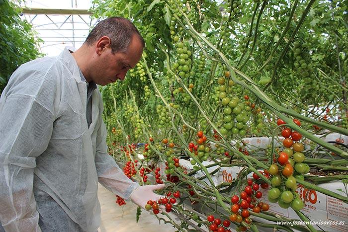 David Herzog, responsable global de tomate de Rijk Zwaan. /joseantonioarcos.es