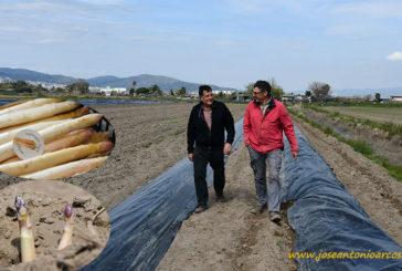 Calçots y espárragos de Gavá, nuestra última visita de campo