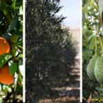 Green Has lanza nuevas herramientas para producción ecológica