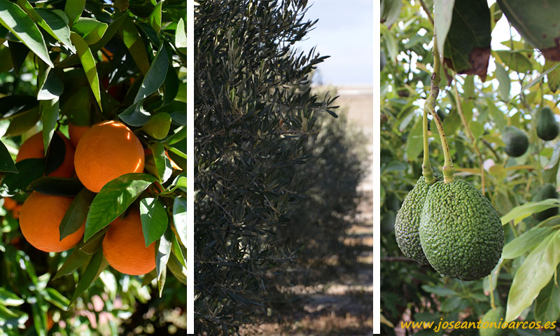 Nuevo bioactivador orgánico de Green Has Iberia-joseantonioarcos.es