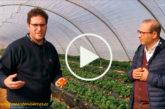 Huelva mejora todos los parámetros de su fresa