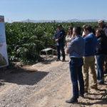 Nunhems impulsa el consumo de alcachofa en España